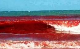 Hội nghề cá không đồng tình thuỷ triều đỏ gây chết cá