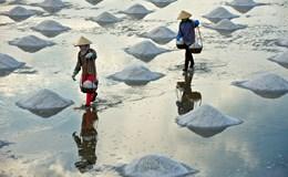 Phó Thủ tướng yêu cầu mua tạm trữ muối cứu diêm dân