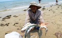 Chuẩn bị trình Chính phủ chính sách hỗ trợ ngư dân 4 tỉnh miền Trung