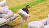"""Xuất khẩu gạo Việt Nam đối diện nhiều """"tin xấu"""""""