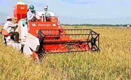Cung vượt cầu khiến giá lúa gạo giảm mạnh trong tháng 9
