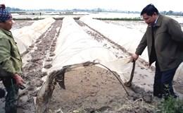 Bộ trưởng Bộ NNPTNT xắn quần kiểm tra lấy nước đổ ải