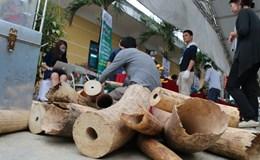 Lần đầu tiên Việt Nam tiêu hủy hơn 2 tấn ngà voi và 70 kg sừng tê giác