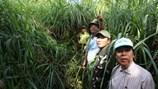 Xuyên qua vùng lõi VQG Cát Tiên khảo sát dự án phá rừng làm đường
