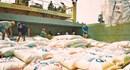 Xuất khẩu gạo vẫn khó đường ra