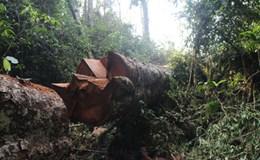Tam thập lục kế... giết rừng