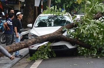 Chủ tịch UBND TP Hà Nội: Người dân hạn chế ra đường khi mưa bão