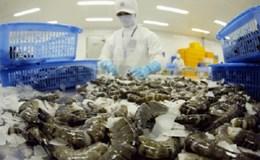Doanh nghiệp Việt bị thiệt hại do lệnh cấm nhập khẩu tôm của Úc