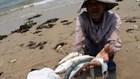 Hoan hô: Chưa vội khẳng định cá an toàn