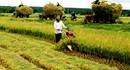 Miễn thuế sử dụng đất nông nghiệp cho hộ gia đình, cá nhân: Giảm bớt khó khăn cho nông dân