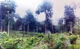 Rừng đầu nguồn Khe Si bị chặt phá nghiêm trọng: Mới kỷ luật khiển trách 2 chủ tịch xã