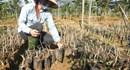 Dự án FDI 37 triệu USD vào nông nghiệp Quảng Trị: 11 lần gia hạn thực hiện chỉ đạo của Ủy ban Nhân dân tỉnh