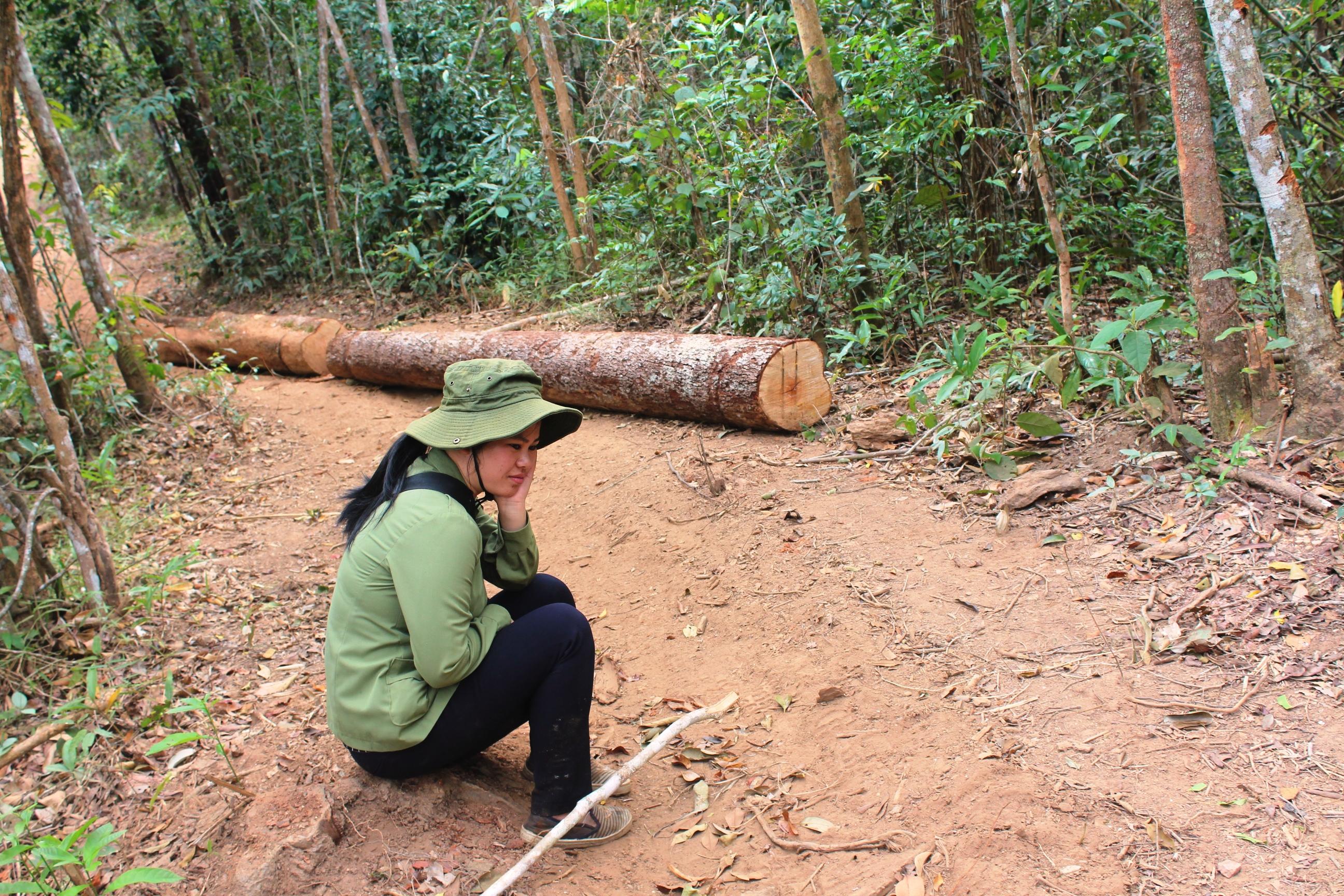 Vụ ai bảo kê gỗ lậu tại Tây Nguyên: Chờ tỉnh Gia Lai xử lý tang vật