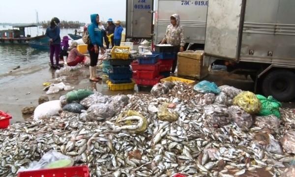 Cá được chất thành đống tại chợ Đồng Hới vì ế ẩm, không có người mua. Ảnh: LÊ PHI LONG (laodong.com.vn).