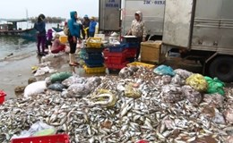 Bộ TN&MT đưa ra biện pháp khẩn giải quyết hiện tượng cá chết ở ven biển miền Trung