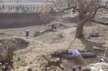 Hãi hùng người đàn ông quyết chiến với con báo hung dữ chỉ bằng một cây gậy gỗ