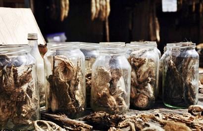 Khung cảnh rợn người ở chợ dược liệu động vật