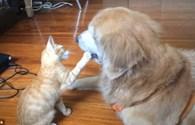 Ngỡ ngàng với tình cảm đặc biệt giữa chó và mèo