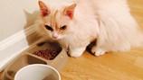 Con mèo bỗng dưng nổi tiếng nhờ vẻ mặt đăm chiêu