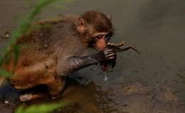 Con cóc đáng thương bị chú khỉ quăng quật trong hồ nước