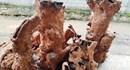 Quảng Bình: Tổng kiểm tra việc tàng trữ, tiêu thụ gỗ  hương giáng
