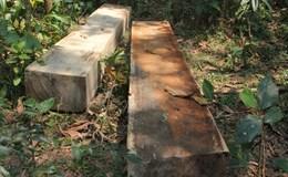 Vụ phá rừng phòng hộ tại huyện Bắc Trà My: Không chấp nhận báo cáo qua loa