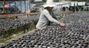 An Giang: Dân đổi đời từ nuôi cá sặc rằn