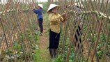Thanh Trì về đích nông thôn mới