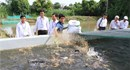 Đồng Tháp: Dân xóa nghèo từ nuôi cá lóc trong bể xi măng