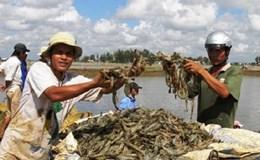 Trà Vinh: Dạy nghề nuôi thủy sản cho nông dân