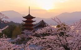 Lạc lối giữa những thiên đường hoa tháng 4 đẹp mê hồn