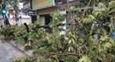 Phó Thủ tướng Hoàng Trung Hải: Phòng, chống tốt nên đã giảm thiểu sự thiệt hại của bão