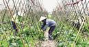 Hà Nội dẫn đầu cả nước về xây dựng nông thôn mới