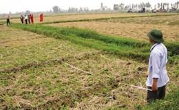 Nông nghiệp - mũi nhọn phát triển kinh tế của Ứng Hoà