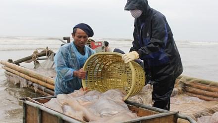 Tiềm năng biển, đảo Việt Nam: Động lực phát triển kinh tế bền vững