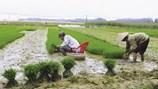 Nông thôn mới là nông thôn giàu