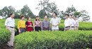 Vai trò của hợp tác xã trong xây dựng nông thôn mới