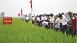 Nông nghiệp công nghệ cao gắn với xây dựng nông thôn mới