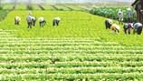 Phú Xuyên: Nhiều xã đạt chuẩn nông thôn mới