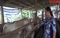 ''Đột kích'' trang trại ngựa bạch cả trăm con giữa lòng Hà Nội