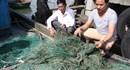 """Lời kể ngư dân về """"Bùn lạ"""" nuốt mất lưới khi đánh bắt trên biển"""