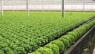 Giúp người tiêu dùng tìm rau sạch tại các kênh phân phối