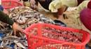 """Bộ KHCN """"lên tiếng"""" về vụ cá chết hàng loạt ở biển miền Trung"""