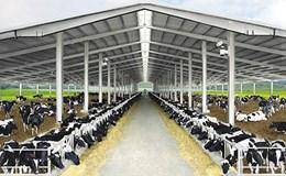 """""""Chìa khoá vàng"""" đưa công nghệ cao vào nông nghiệp:  TH sản xuất sữa tươi theo chu trình khép kín, thân thiện môi trường"""