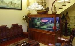 Vì sao nên đặt bể cá trong phòng khách theo phong thủy?