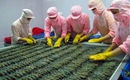 Bộ Công Thương đề nghị Úc bãi bỏ lệnh tạm ngừng nhập khẩu tôm và thịt tôm chưa nấu chín
