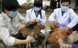 Tăng cường kiểm dịch phòng, chống cúm A/H7N9