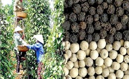 Đề nghị Ấn Độ bãi bỏ tạm dừng nhập khẩu hạt cà phê, tiêu đen, thanh long… của Việt Nam