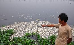 Thống đốc chỉ đạo hỗ trợ tín dụng cho ngư dân vùng cá chết tại miền Trung