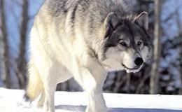 """Ngân hàng ngoại tăng hiện diện: Nỗi lo khi """"sói"""" đã vào nhà"""